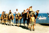 A camel park in Cyprus